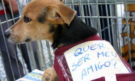 Cinco motivos para você optar pela adoção do animal de estimação