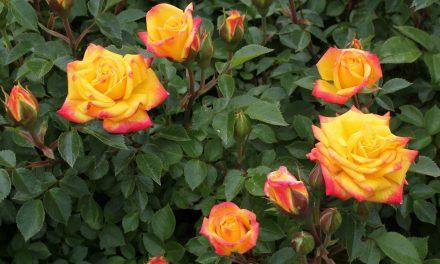 Conheça 07 plantas resistentes ao sol e deixe seu jardim bonito