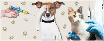 Cerca de 36 mil cães e gatos devem receber vacina anti-rábica em Imperatriz