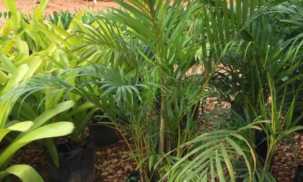 Melhore seu ambiente: Conheça dez tipos de folhagens para cultivar em casa