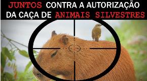Internautas discutem projeto de lei que libera caça aos animais