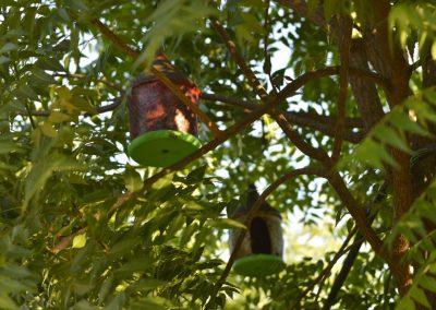 Casas de passarinho, penduradas nas árvores do Pomar