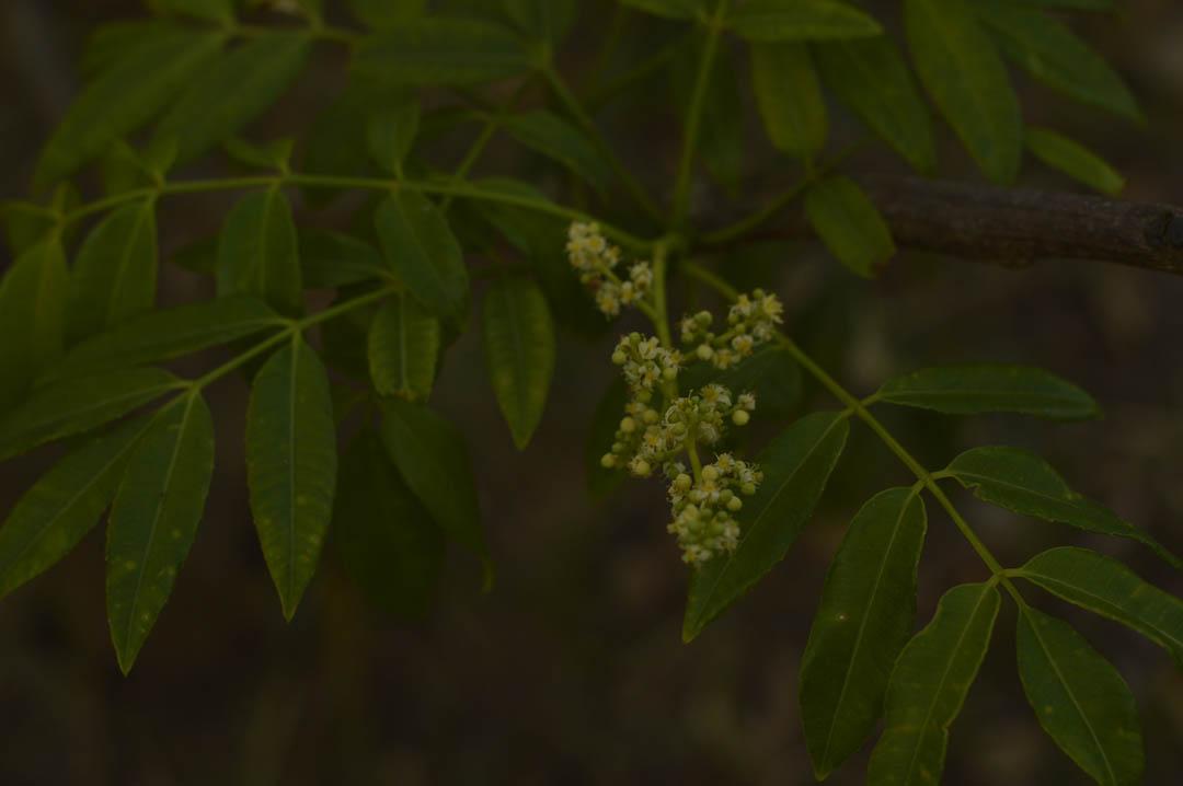 Botões de flor - Pomar Comunitário