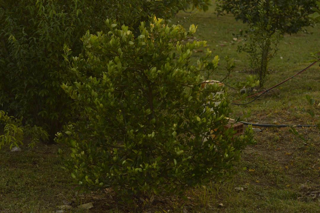Planta II - Pomar Comunitário