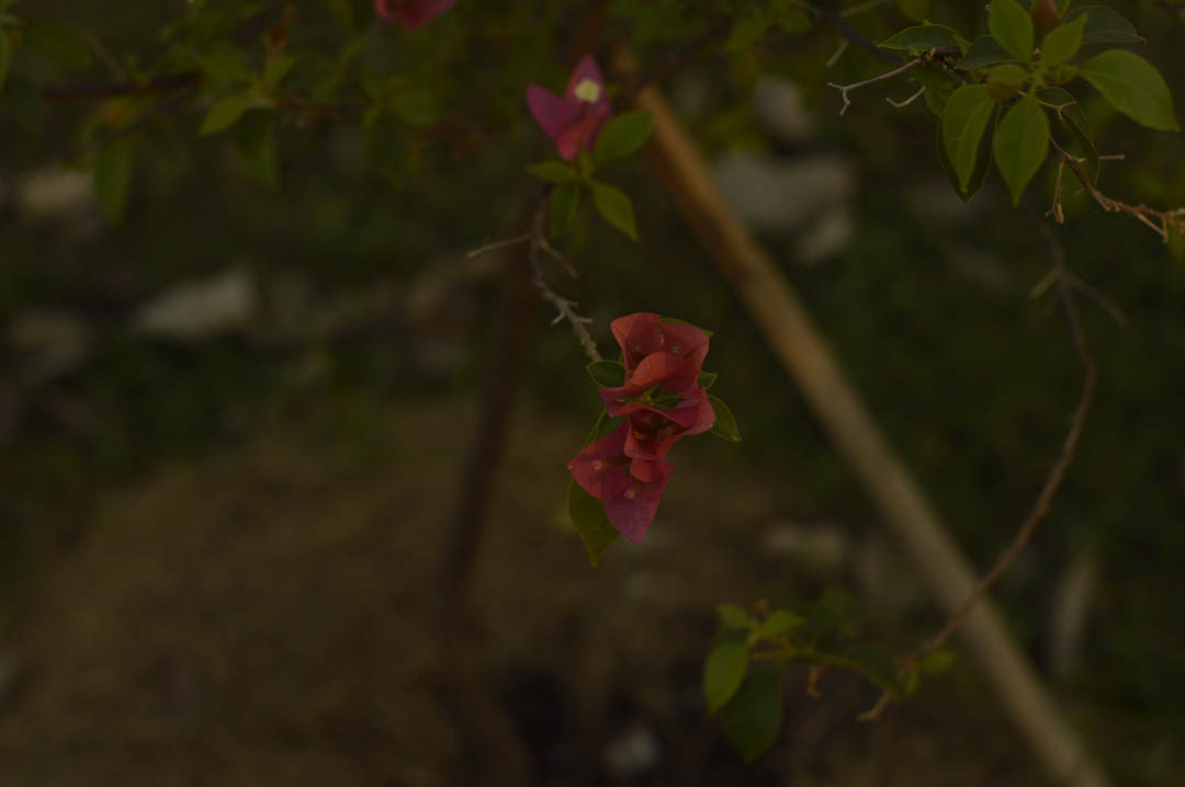 Flores - Pomar Comunitário