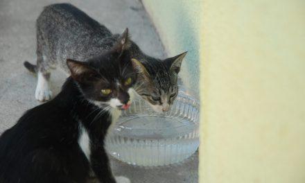 Gatos adultos e filhotes abandonados na UFMA podem ser adotados em feira no próximo sábado