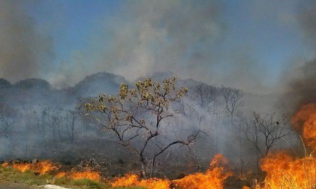 Dino também pede ajuda no combate as queimadas na Amazônia