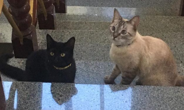 Gpai realiza campanha de doação na 1ª Feira Pet