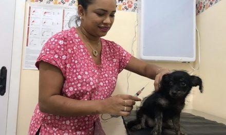 Até setembro, 55 cães com Calazar foram sacrificados em Imperatriz