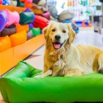 Conheça dez pet shops bem avaliados em Imperatriz
