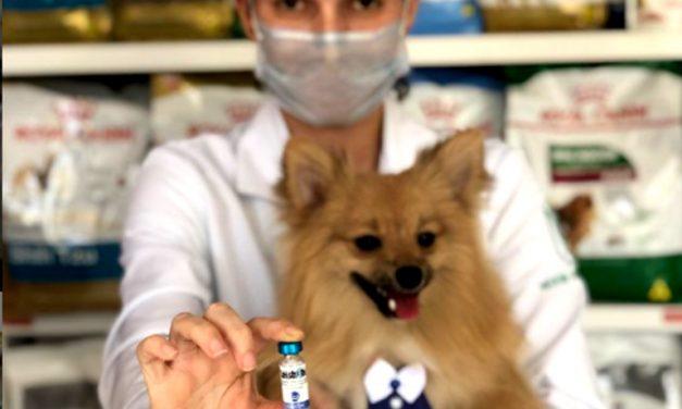 Pet saudável, sem sair de casa: clínicas veterinárias que atendem pela internet