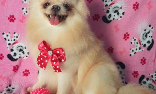 Canis de Imperatriz venderam mais cachorros durante a pandemia